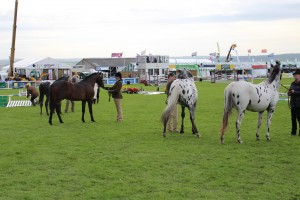 ROYAL CORNWALL SHOW (3)