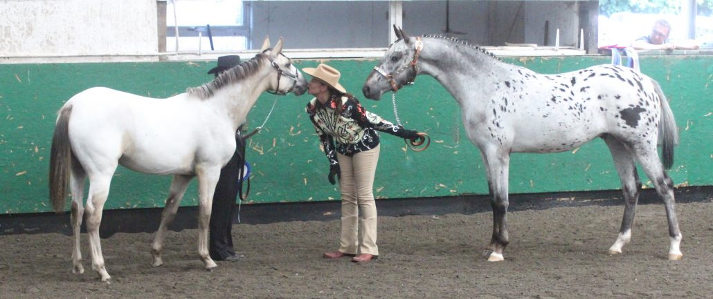 The Appaloosa Horse Club (ApHC) UK Spring Show 2019 - A